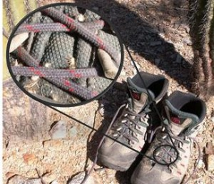 Boots are a notoriously common vector for seeds of invasive species.
