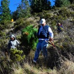 Friends' 2014 pine pull - down the hill - Matt wordeman