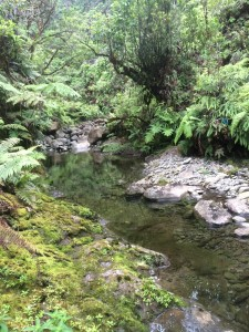 Stream runoff is captured from East Maui to meet the needs of upcountry residents and agriculture.