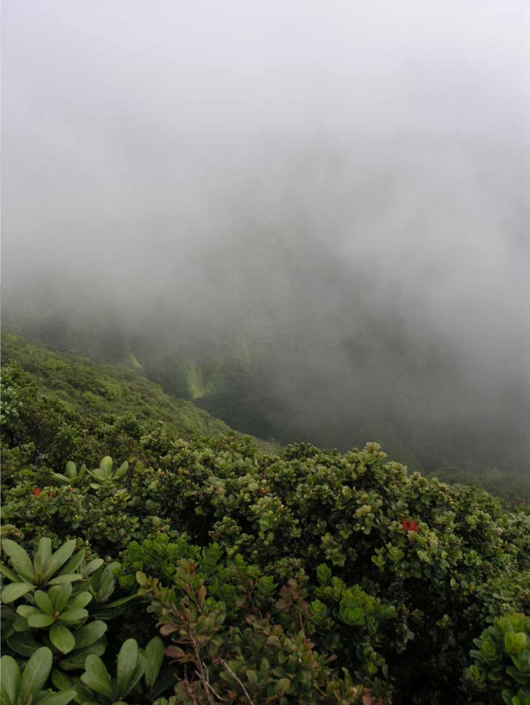 ear the summit of Puʻu Kukui on West Maui clouds are the norm. The rain that falls here and on the slopes of Haleakalā supplies Maui residents year-round.