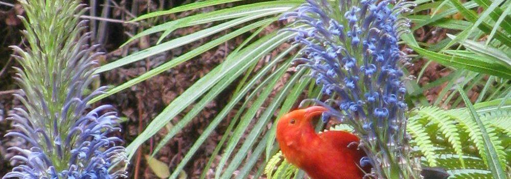 Celebrating Native Hawaiian Plant Month
