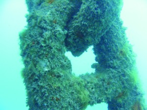 Organisms colonize an anchor chain. Photo courtesy of Hawaii DLNR-DAR