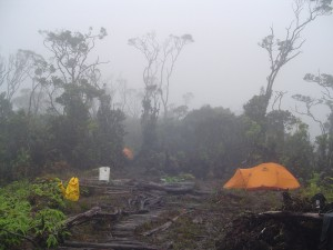 A spike camp in the East Maui rainforest. Camps like these are home for the crews working to protect and remove invasive species in this remote section of Maui. Photo by Maui Invasive Species Committee