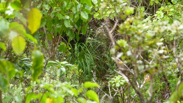 Pampas in field zoomed in