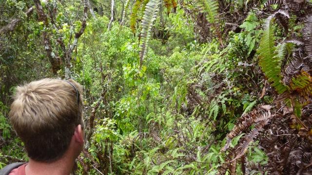 Chris sees a pampas