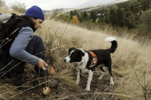In Missoula Montana trainer Dalit Guscio is about to reward Seamus. He's been tracking down invasive Dyers woad plants. Seamus and Dalit are with the Montana-based Working Dogs for Conservation. Photo by Elizabeth Stone.