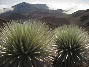 """...the tie-ribs of earth lay bare before us. It was a workshop of nature still cluttered with the raw beginnings of world-making."" wrote Jack London about Haleakalā Crater. Photo by Forest and Kim Starr."